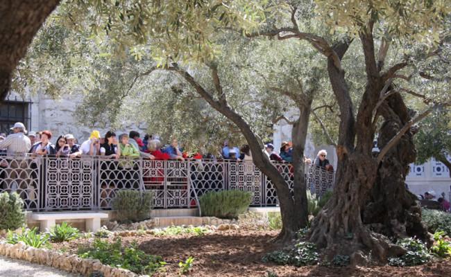 l_fedeli_Getsemani191012